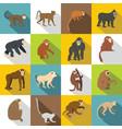 monkey types icons set flat style vector image