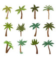 california palm trees summer tropical plant vector image vector image