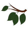 four green leaves on brown branch on white vector image