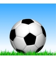 Soccer ball on the grass football vector image
