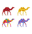 bactrian camel indian camel with a pattern vector image vector image