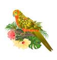 bird sun conure parrot home pet parakeet vector image vector image