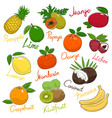 set of tropical and citrus fruits vector image vector image