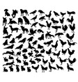 animal set silhouettes vector image vector image