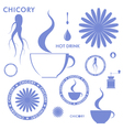 Chicory vector image vector image