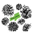 Collection of drawn pine cones vector image
