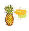 pineapple hand drawn fruit isolated vector image vector image