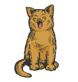 yawning cat color sketch engraving vector image