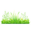 green grass with dandelions vector image