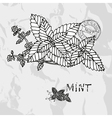 Hand drawn mint plant vector image