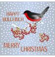 happy small bird bullfinch on a rowanberry branch vector image vector image