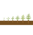 infographic cannabis plant growth stages vector image