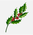 branch christmas holly berry isolated vector image