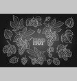 graphic hops collection vector image vector image
