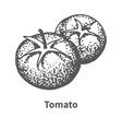 hand-drawn tomato vector image vector image