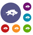 sea bass fish icons set vector image vector image