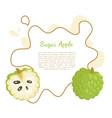 sugar-apple sweetsop custard apple isolated vector image vector image