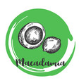 macadamia nut vintage hand drawing of nuts vector image
