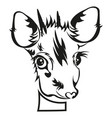 stencil of die cutting baby deer head vector image vector image
