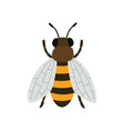 bee top view isolated vector image