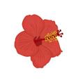 Hawaiian Hibiscus Flower vector image vector image