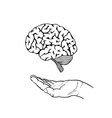 human brain and hand vector image vector image