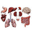 set human organs hand drawn sketch vector image