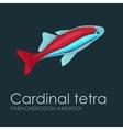 Aquarium fish Cardinal tetra vector image vector image