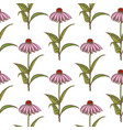 colored echinacea seamless pattern vector image vector image