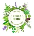 Culinary herbs round emblem vector image vector image